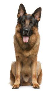 hundförsäkringar